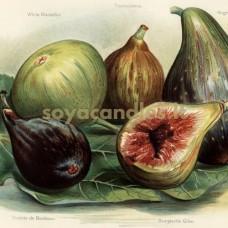"""Aromatinis aliejus """"Juodoji figa ir vetiverija"""", 30 g"""