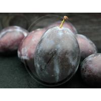 """Aromatinis aliejus """"Juodoji slyva ir rabarbaras"""", 30 g"""
