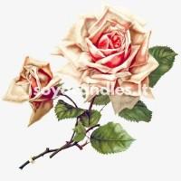 """Aromatinis aliejus """"Rožės ir jazminai"""", 30 g"""
